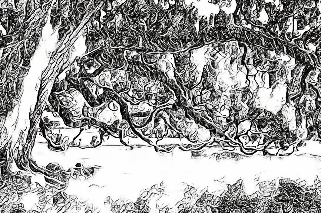 poème-le vieux chene nature gregory roose arbre poesie recueil ecologie homme ville